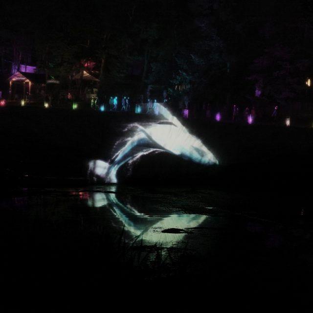 latitude water screen whale