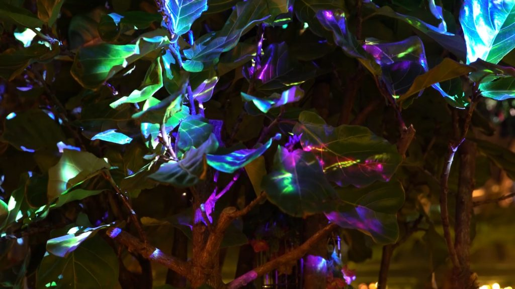 Annabels Magical Tree 360 Projection Mapping AR by LCI Productions
